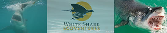 White Shark Ecoventures - Great White Shark Cage Diving - Cape Town South Africa