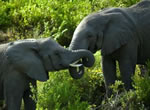 Elephant viewing at Garden Route Game Lodge